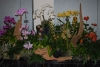 odoms-orchids-display